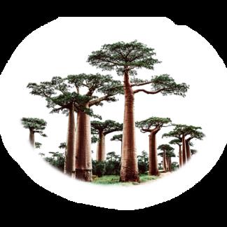 Éterické oleje z Madagaskaru